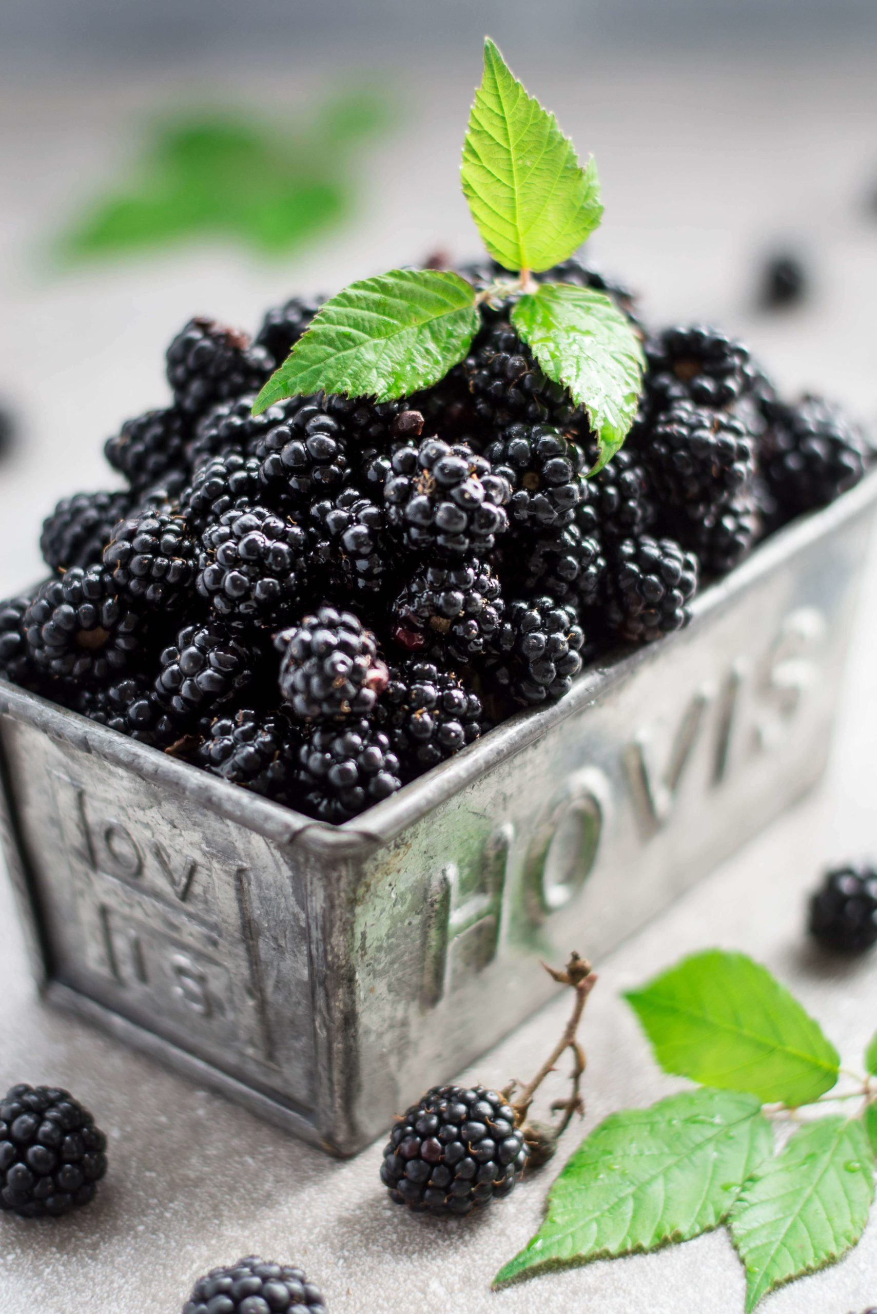 Close up shot of wild blackberries in a grey tin